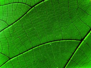 green_leaf_detail