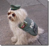 german police dog_small