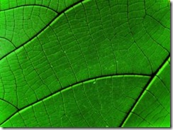 Green_leaf_detail