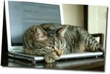 lap_cat