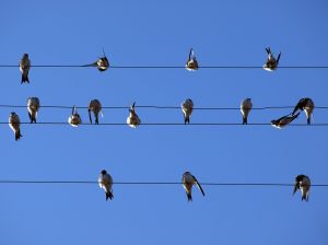 birds_meeting