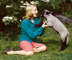 lady_lamb_crop