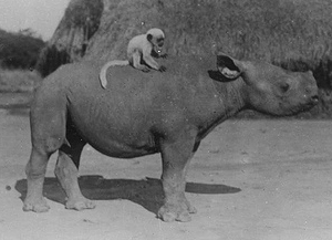 monkey_rhino_crop