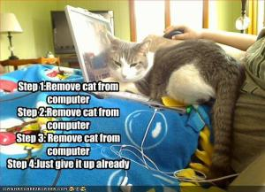 cat-is-on-your-computer